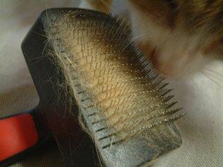 毛だらけのブラシ