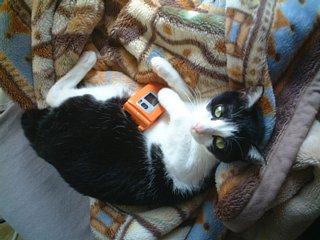 携帯電話を抱えるノリ