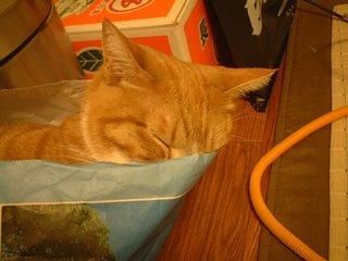 新聞袋で熟睡するワンチャ