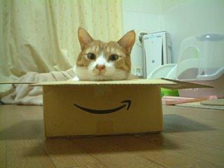 わんちゃ箱