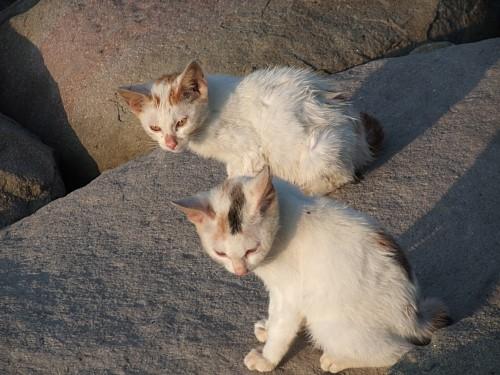海水に濡れた猫