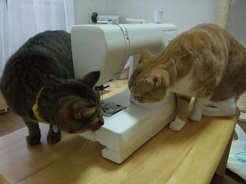 ミシンと猫